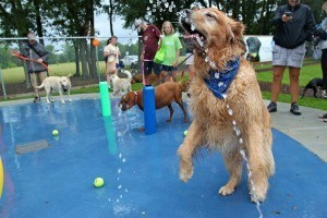 beneful-dog-park_0